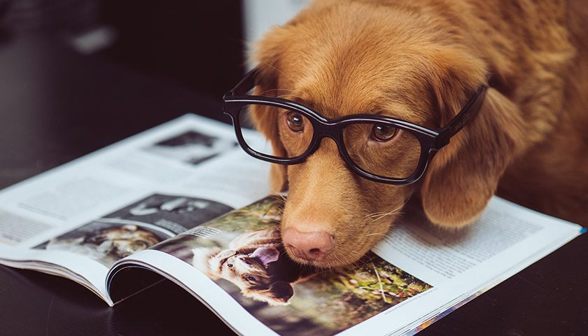 Commentary: The Intelligence of Canines