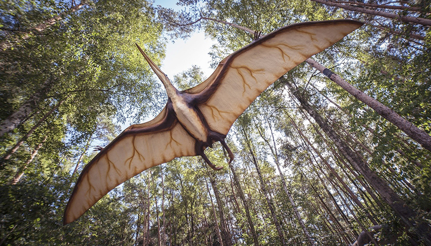 Study Suggests Pterosaurs Could Fly Soon After Hatching